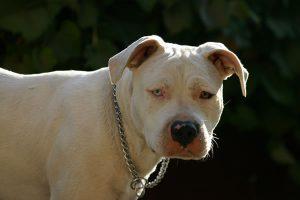 Hefferon Lawyers Premises Liability Dog Bites and Animal Attacks